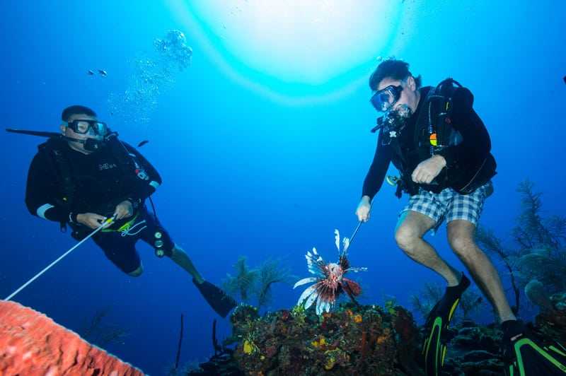 Hunt for Lionfish