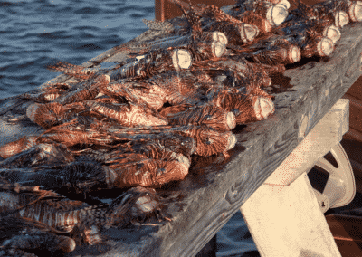 Canary Cove Lionfish Hunting Results