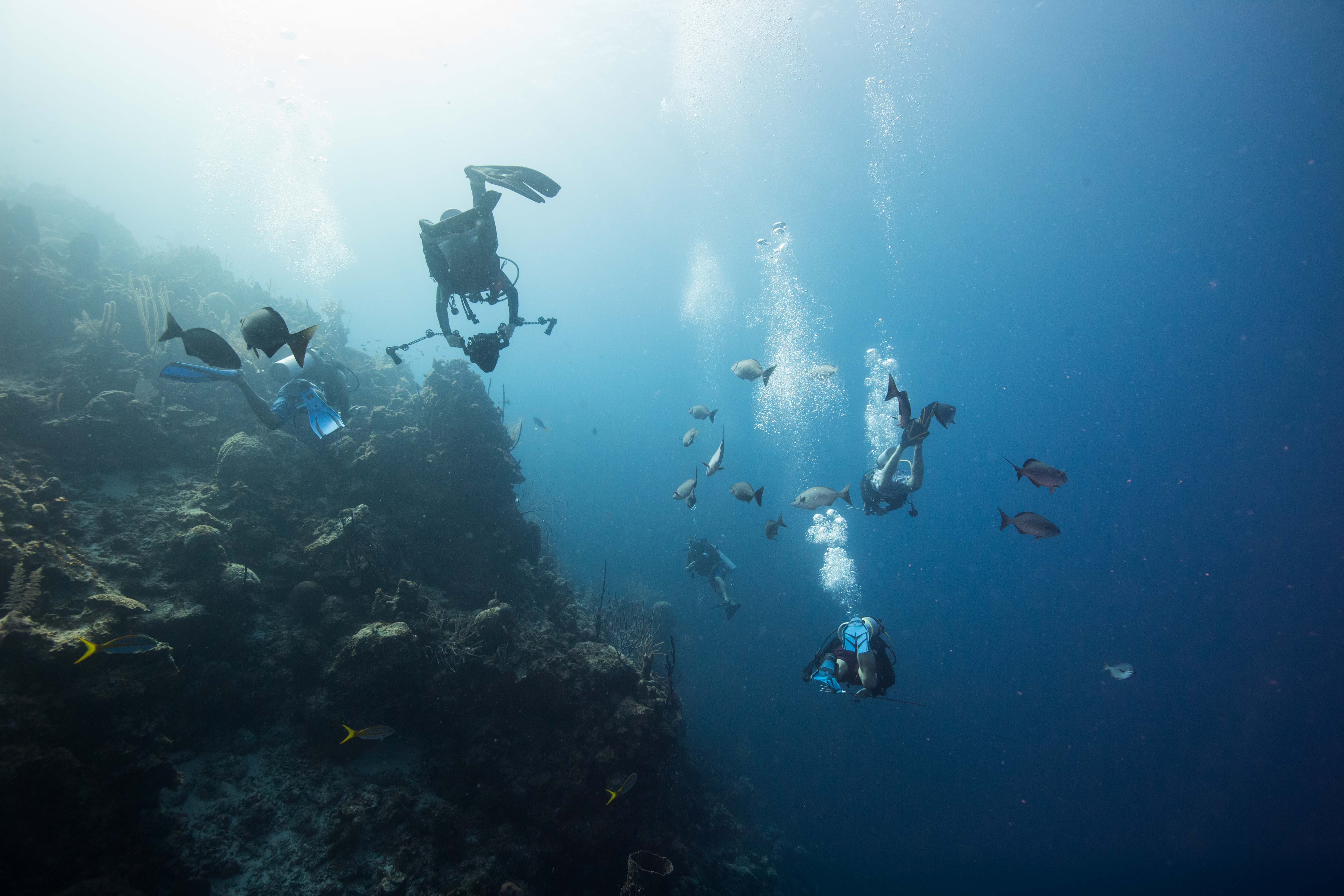 Canary Cove Hydrus Divers