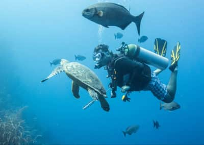 SCUBA Diving with Turtles & Fish